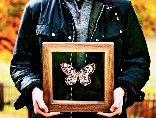 Rice paper butterfly in handmade walnut frame.
