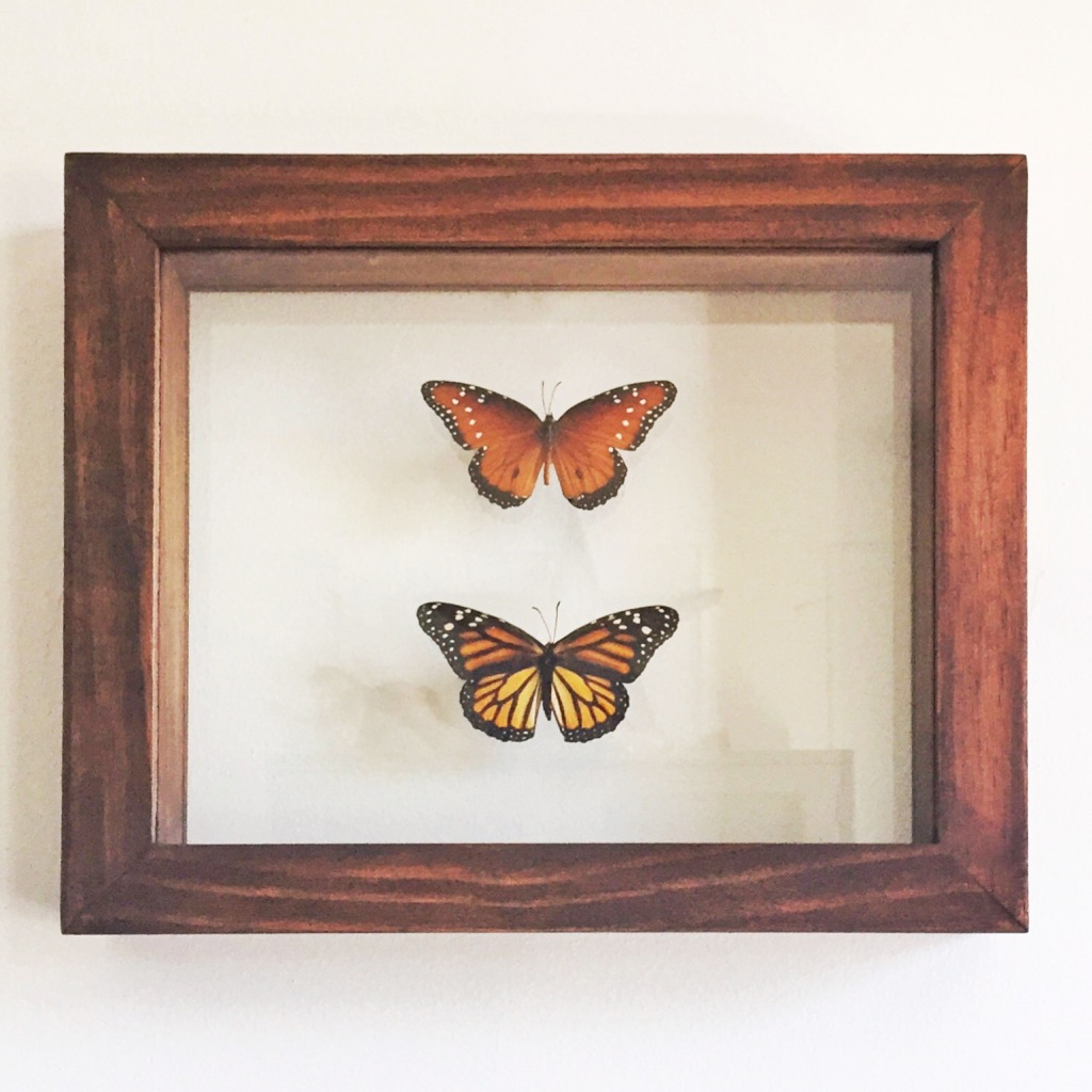 Lovely custom framed butterflies ordered for a birthday gift from husband to wife.